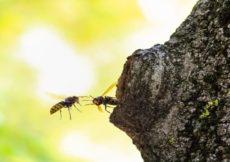 Wat te doen als je gestoken bent door een wesp