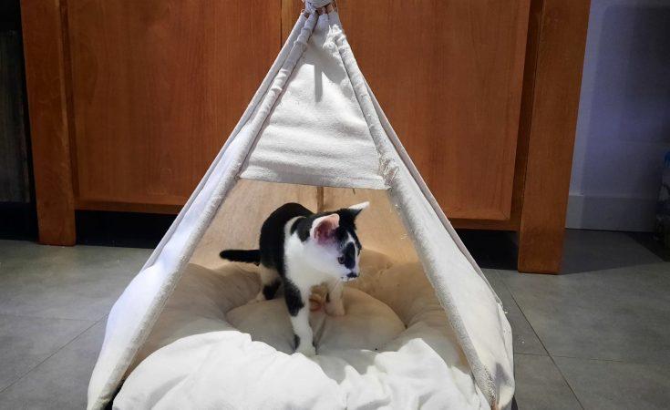 Kat-kamperen