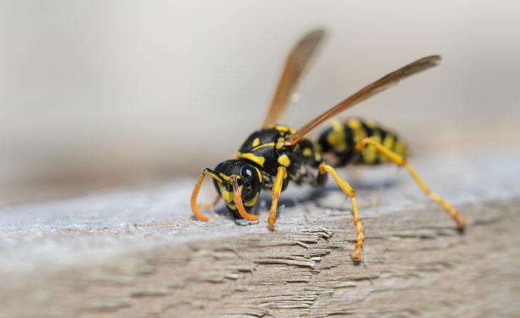 Wat te doen tegen wespen op de camping